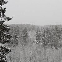 Зимняя сказка :: Михаил Лобов (drakonmick)