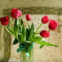 Январские тюльпаны... :: Елена