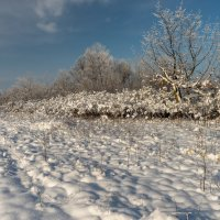 Мороз и солнце ... :: Александр Плеханов