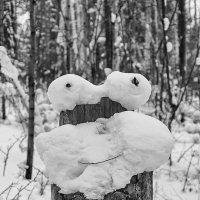 Я — Пень, здравствуйте! :: Сергей Анисимов