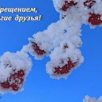 Морозный пух такой чудесный... :: Галина
