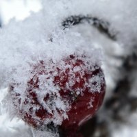 Замерзший :: Ольга Рощектаева