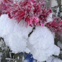 Пушистый снежок. :: zoja