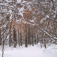 Снежная зима :: натальябонд бондаренко