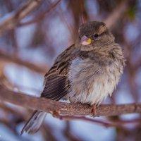 Зима :: Надежда Торопова