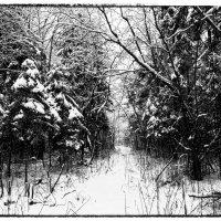 Зима :: Виктор Журбенков