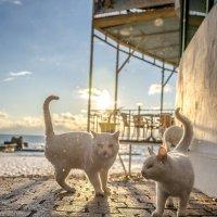 ***Про море, котов, и белый снег... :: mikhail grunenkov