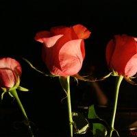 Красота прекрасна :: Лидия (naum.lidiya)
