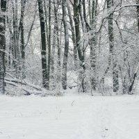 Зимний пейзаж.... :: Юрий Стародубцев