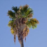 пальмы :: Александр Деревяшкин