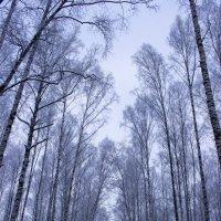 Зимний парк :: Sergey Lebedev