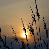 На фоне зимнего заката.. :: Юрий Анипов