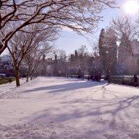 Красота зимы :: Светлана Прокопенко