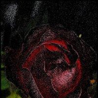 Опалённая роза :: Нина Корешкова