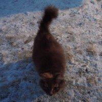 Не подвальная кошка (живет у нас на работе) :: Андрей Лукьянов