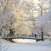 мостик в  зимнем парке :: Елена