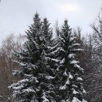 Измайловский парк зимой :: Юрий Бомштейн