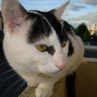 Балконный сторож,,, :: Irina Fay