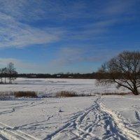 Зимний день. :: zoja
