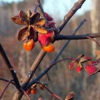 цветы первых заморозков :: Александр Прокудин