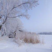 Морозное утро :: Елена Решетникова