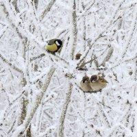 В кружевах зимы. :: Hаталья Беклова