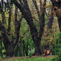 Осень в Мариинском парке :: Владимир Бровко