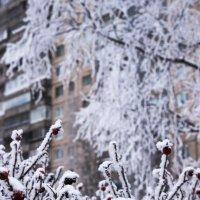 Крещенские морозы :: Oleg Ko