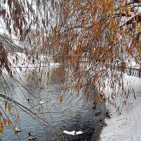 Встреча осени с зимою! :: Наталья