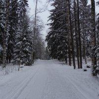 Тропа здоровья в лесопарке :: Ирья Раски
