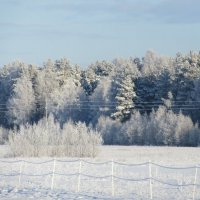 Зимний лес :: Mariya laimite