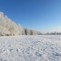 Зимние просторы :: Mariya laimite