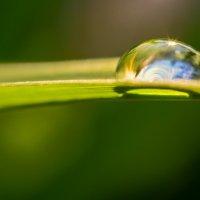 Капля дождя :: наталья