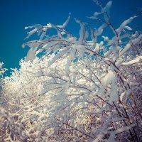 Мороз :: Юрий Кучевасов
