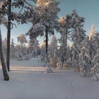 В заснеженном лесу светло и тихо... :: Татьяна А