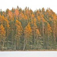 освещённый солнцем лес :: Елена