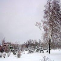 Белозаснеженная зима. :: Мила Бовкун