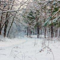 Природа зимой.. :: Юрий Стародубцев
