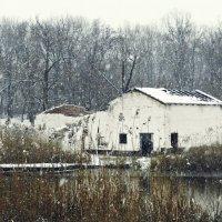 снег идет :: алексей сергиенко