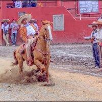 Чареррия, Мексика :: Elena Spezia