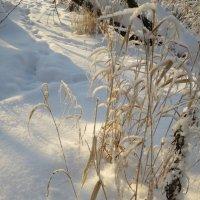Зима :: Вера Щукина