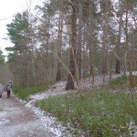 Прогулка в зимнем лесу :: Nina Yudicheva
