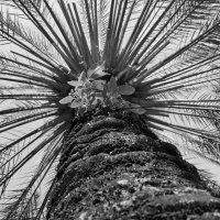 Пальмовое солнце :: annet Sagitova