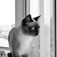 Кошка :: Светлана Мещан