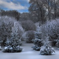 Зима :: Татьяна Панчешная