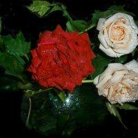 Мне  подари   букет из  роз ...без  слов... :: Людмила Богданова (Скачко)