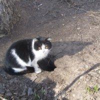 просто кошка :: tgtyjdrf