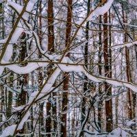 Зима в лесу. :: Анатолий. Chesnavik.