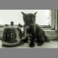 А молоко в чайник налить можно? :: Сергей Черных