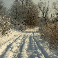Зимняя дорога :: Александр Плеханов